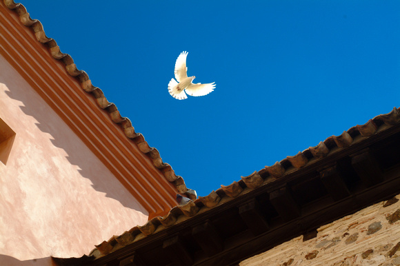 Spain - dove of peace